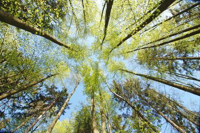 trees-thumbnail